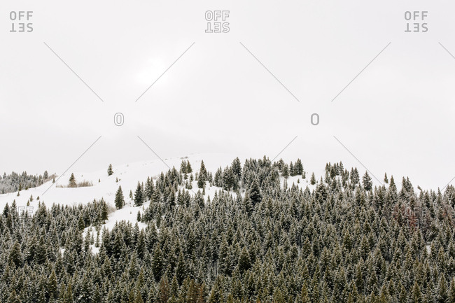 Snow covered mountain with snow covered trees near Sun Valley, Idaho