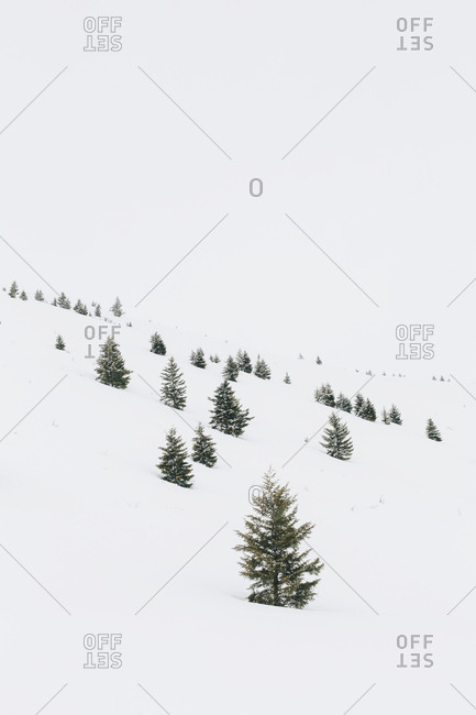 Snow covered mountain and trees in Sun Valley, Idaho