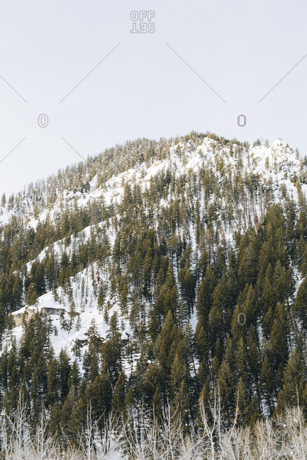 Green trees against a snow covered mountain background  near Sun Valley, Idaho