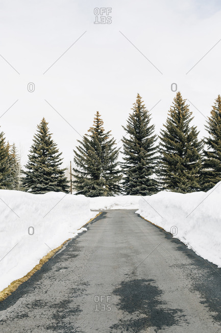 Snow drifts along a narrow road by forest in Sun Valley, Idaho