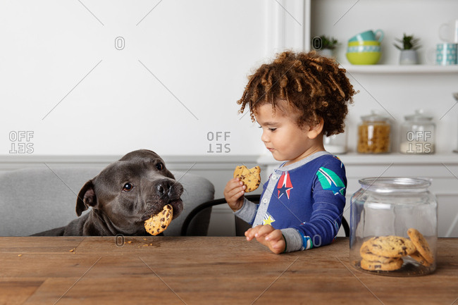 Boy and dog steal and eat cookies