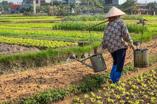 HANOI, VIETNAM - JANUARY 2018: Farmer waters garden