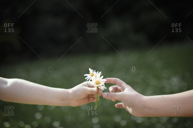 Close-up of hand handing over flowers