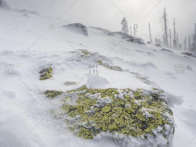 Germany- Bavaria- Bavarian Forest- Lusen- boulder with lichen in winter