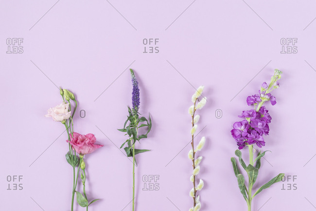 Lisianthus flower - Eistoma grandiflorum- Longleaf speedwell- Veronica longifolia- Goat willow- Salix caprea- Levkoje- Matthiola- pink background