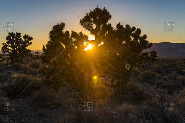 USA- Nevada- Desert bushes at sunset in the desert eastern Nevada