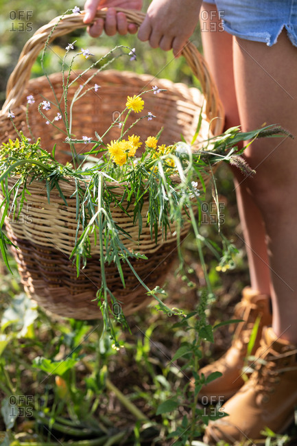 Crop view of anonymous female teenager in casual outfit standing in field and holding basket with green herbs on sunny day in Catalonia, Spain