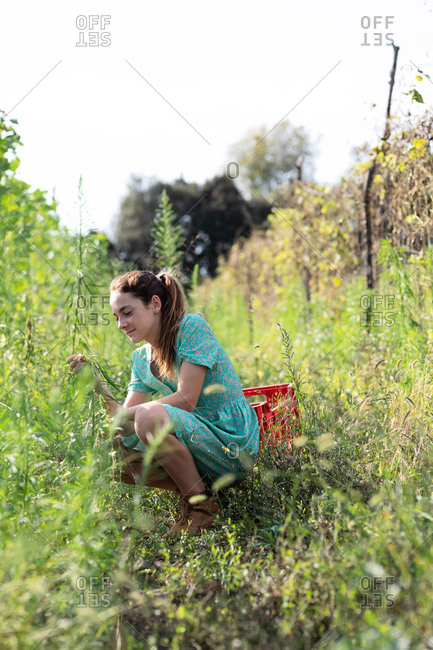 Portrait of teen girl harvesting among green plants on sunny day on farm in Catalonia, Spain