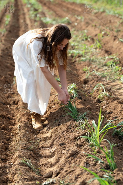 Teen girl harvesting near sprouts on agricultural field in orchard in Catalonia, Spain