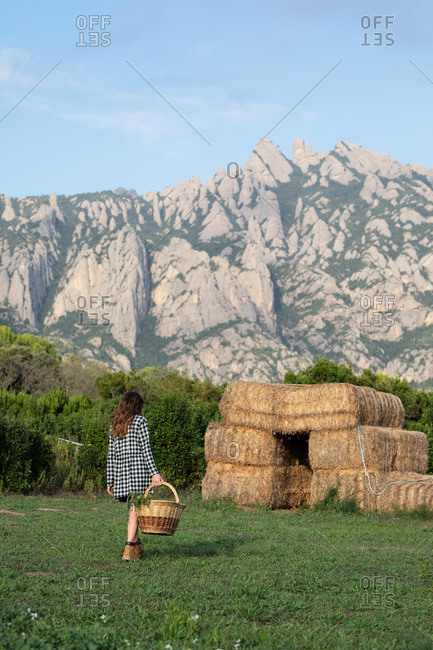 Back view of anonymous female teenager in casual outfit walking in field and holding basket with green herbs on sunny day in Catalonia, Spain
