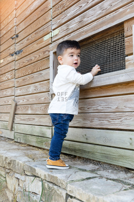 Baby boy in casual outfit touching net on window of wooden shed on sunny day on farm