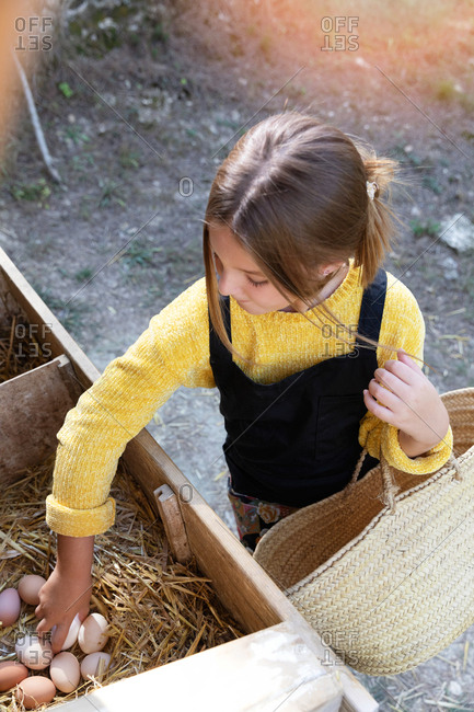 Girl with braided basket taking fresh chicken eggs from nest on sunny day on farm