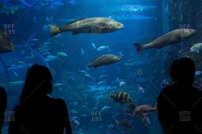 Silhouette of unrecognizable people looking at fishes in an aquarium