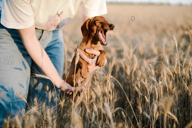 Woman holding dachshund puppy outdoor