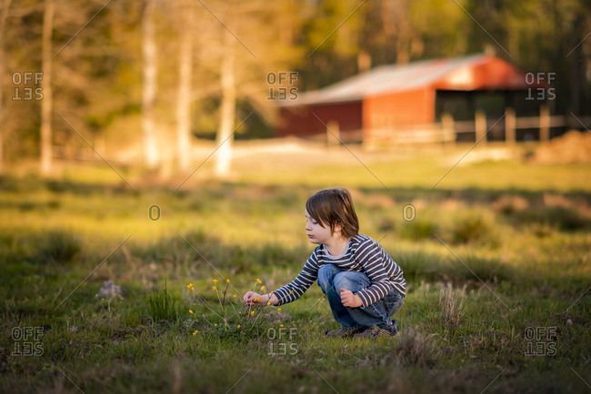 A Small Young Boy Picking Wildflowers On A Farm