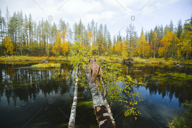 Dog on fallen tree