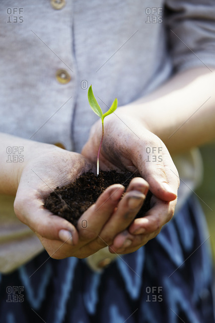 Hands with seedling