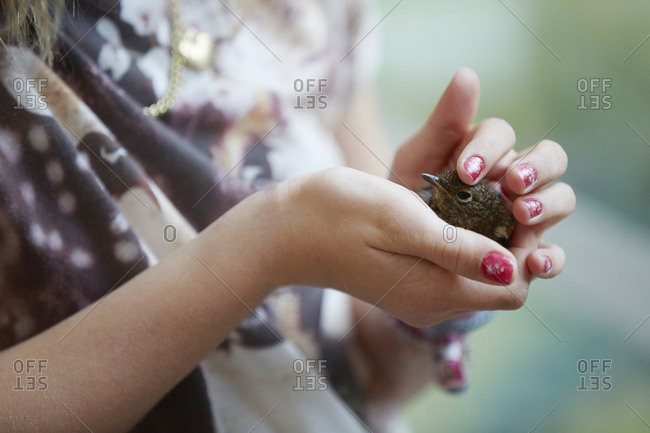 Woman's hands holding chick