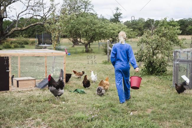 Woman feeding chickens - Offset Collection