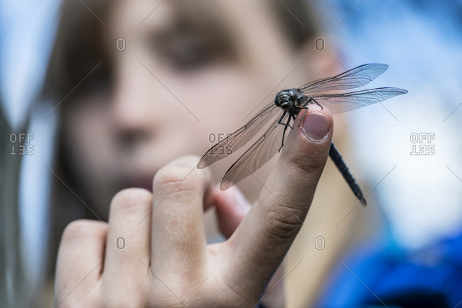 Dragonfly on girls hand