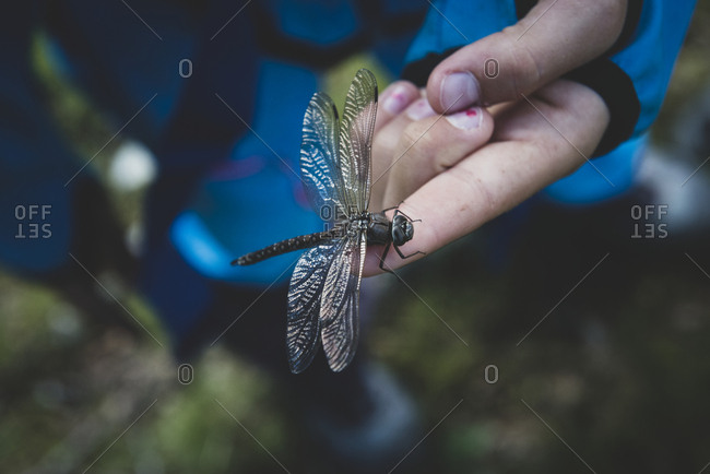 Dragonfly on hand