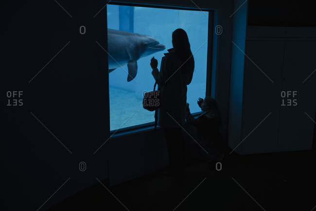 Woman looking at dolphin in aquarium