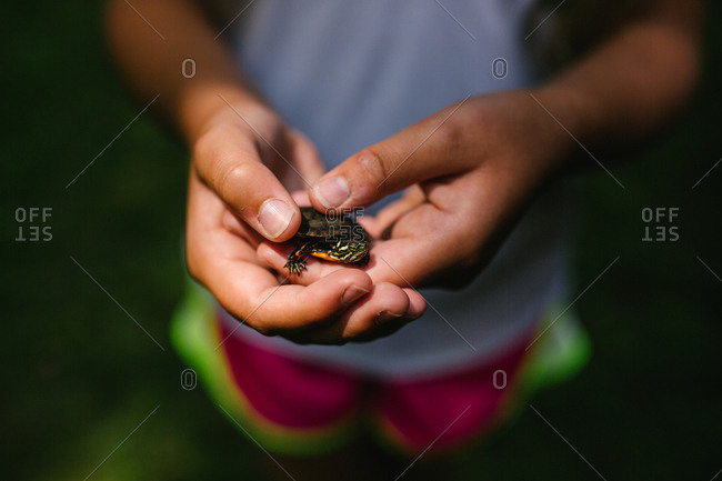 Child's hands holding a small turtle
