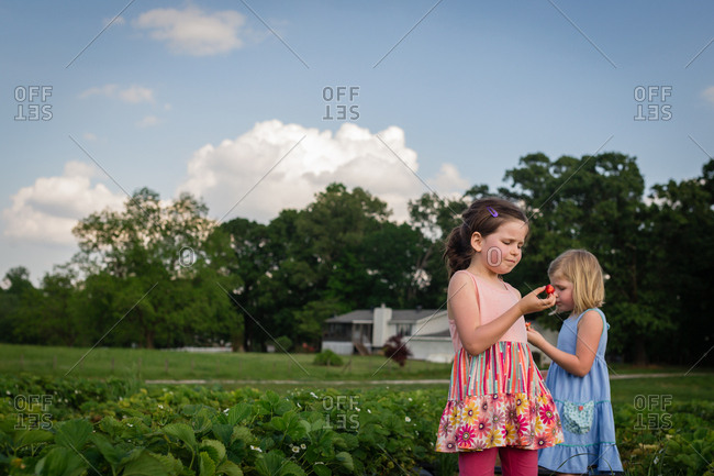 Girl eating strawberries on a field