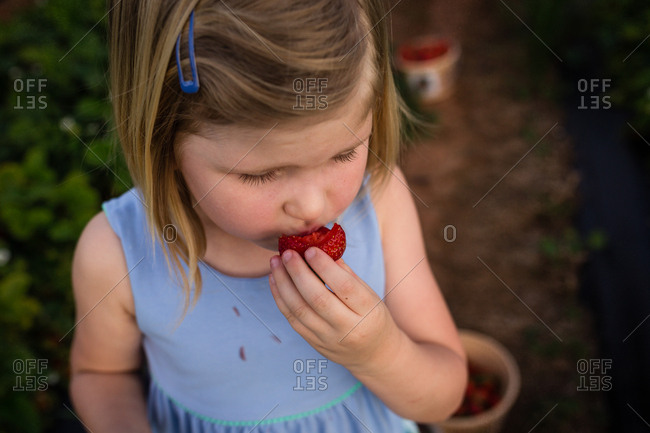 Girl eating a fresh picked strawberry