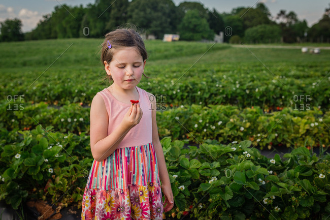 Young girl eating strawberries on a field