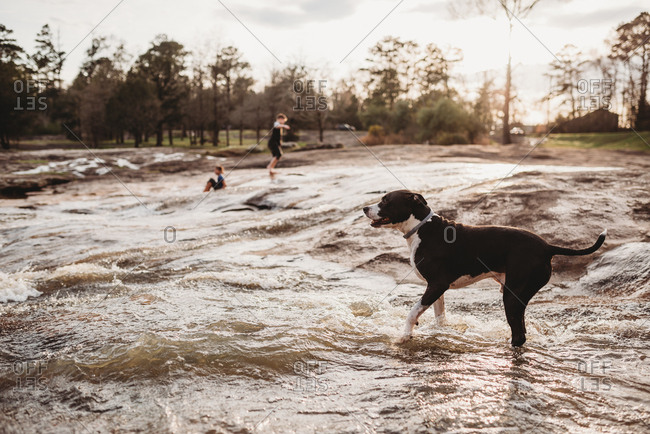 Kids and dog playing in river