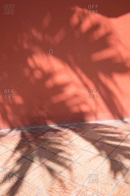 Palm tree shadows on red building
