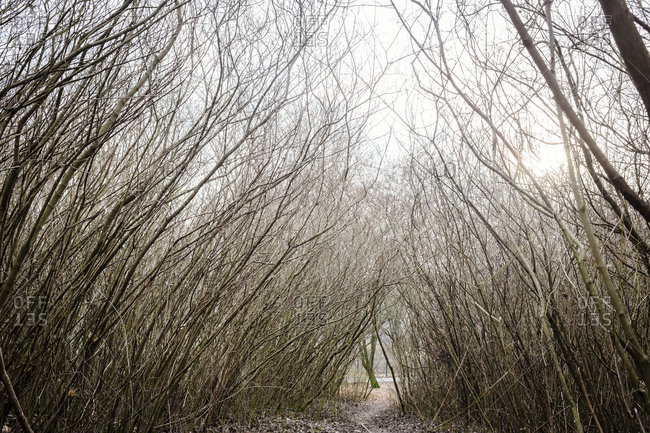 A narrow path leads through bare branches during winter in Berlin, Germany.