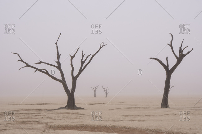 Namibia. Fog shrouds the dead acacia trees in Deadvlei, within Namib Naukluft National Park.