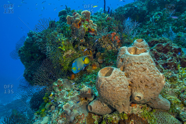 Northern Bahamas, Caribbean underwater