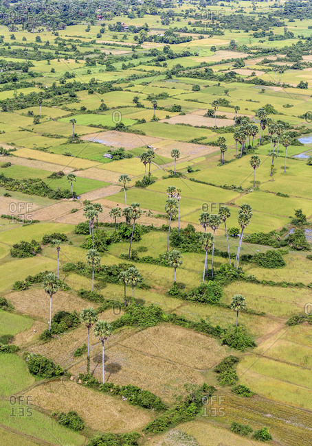 Siem Reap, Cambodia. Rural countryside and rice paddies seen from air.