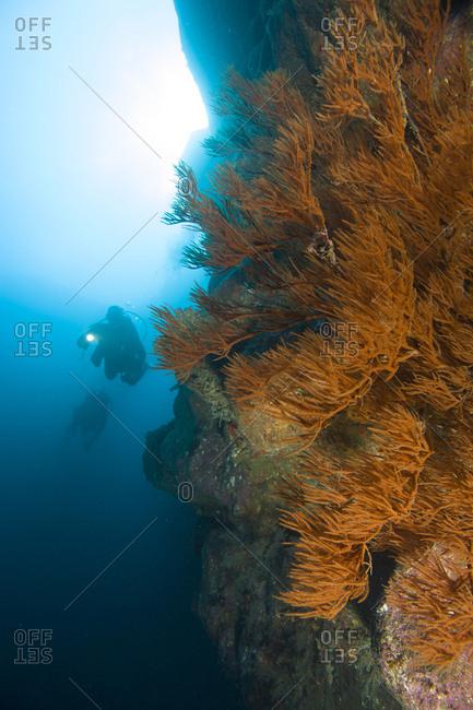 Scuba Diving on the rarely explored North Shore of Maui, Hawaii, USA