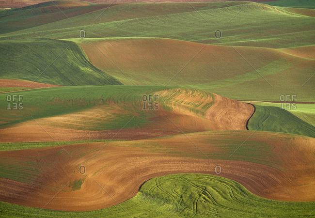USA, Washington State, Palouse. Rolling wheat field.