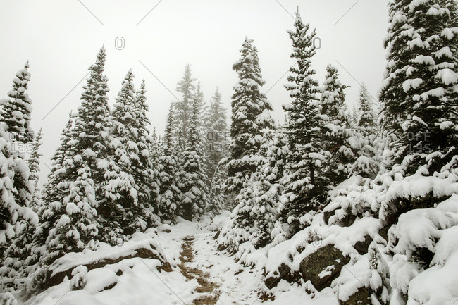 Lake Agnes trail in the Canadian Rockies covered with snow