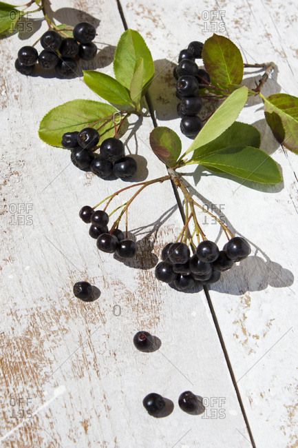 Aronia berrie on white wood- close up