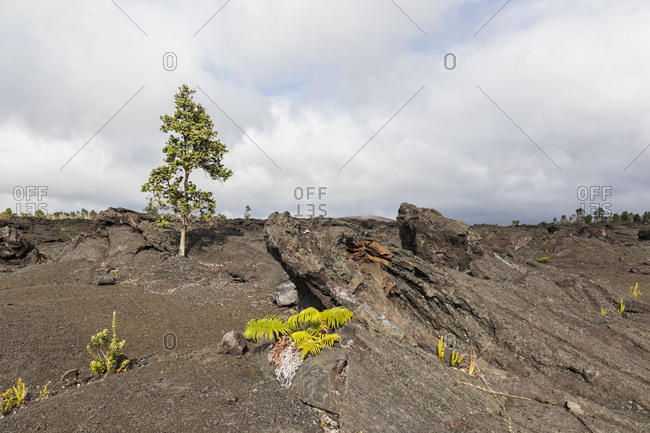 USA- Hawaii- Volcanoes National Park- lava fields along the Chain of Craters Road