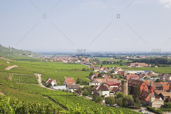 France- Alsace- Kaysersberg- vineyards