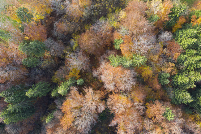 Germany- Bavaria- autumnal mixed forest near Icking- aerial view
