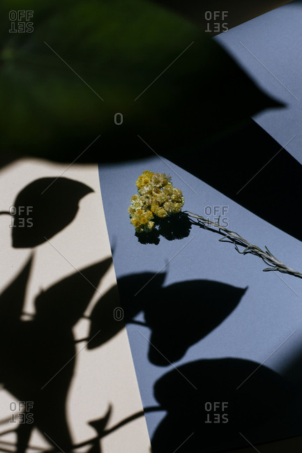 A bunch of yellow flowers surrounded by shadows