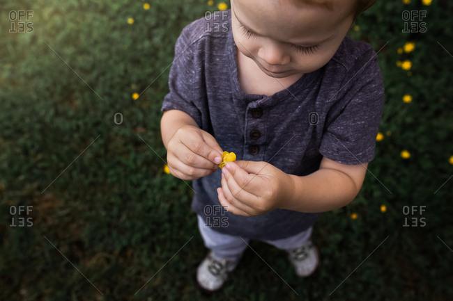 Boy holding little yellow flower in grassy field.