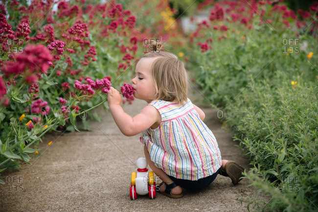 Toddler girl squatting next to a toy duck on a sidewalk smelling a flower