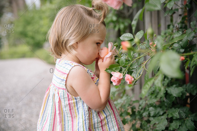 Toddler girl in a striped top smelling a rose