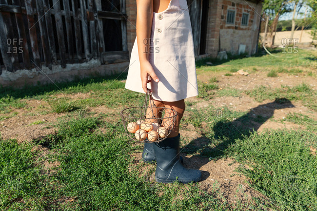 Anonymous teen girl picking fresh chicken eggs from nest in shed while helping with chores on farm