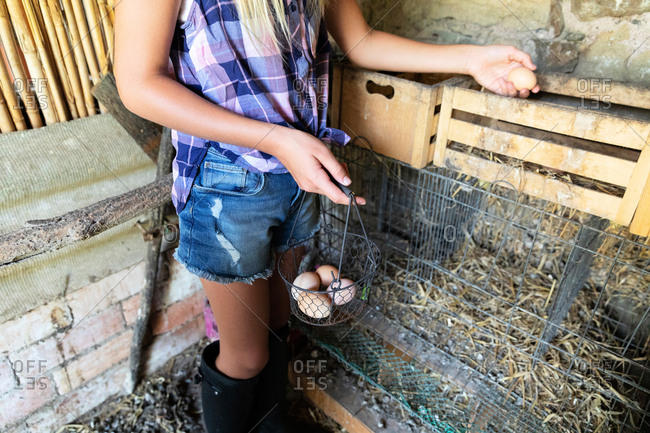Anonymous teen girl in checkered shirt and denim shorts picking fresh chicken eggs from nest in shed while helping with chores on farm