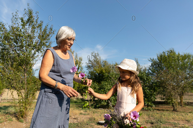 Senior woman and little girl picking beautiful flowers in garden together on sunny day on farm